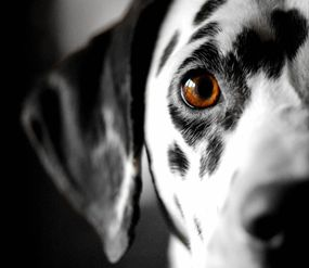 Best Dogs For Cats Uk